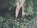 GKC-1998-005